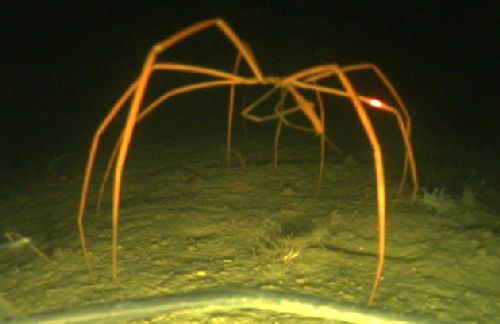 21-Giant-Sea-Spider